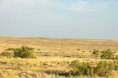 Steppe in the summer. Central Asia Kazakhstan Royalty Free Stock Photography