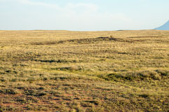 Steppe in the summer. Central Asia Kazakhstan Royalty Free Stock Image