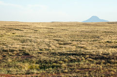 Steppe in the summer. Central Asia Kazakhstan Royalty Free Stock Images
