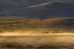 Steppe.Sunset. Caravan of horses.Kazakhstan. Royalty Free Stock Photos