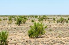 steppe Treeless fattig fuktighet och allmänt lägenhetområde med gra arkivfoton
