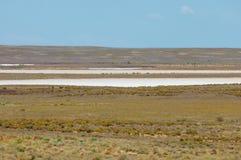 steppe Treeless fattig fuktighet och allmänt lägenhetområde med gra royaltyfria bilder