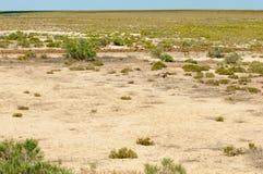 steppe Treeless fattig fuktighet och allmänt lägenhetområde med gra arkivbild