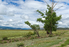 Steppe trees sky mountains Royalty Free Stock Photos