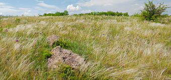 Steppe ukrainienne. Stipe plumeux. Images stock
