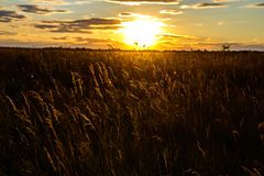 Steppe vegetation in the evening. Royalty Free Stock Photography