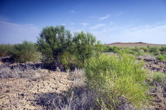 Steppe vegetation Royalty Free Stock Photography