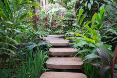 Stepped path through the Thai nature Royalty Free Stock Photos
