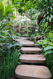 Stepped path through the Thai nature Stock Images