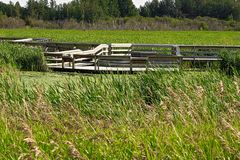 Stepped platforms allowing users to enjoy and expore a marsh.  royalty free stock photos