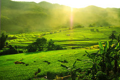 Stepped Rice Field Stock Photography