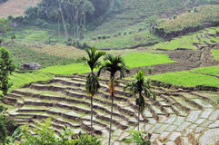 Stepped Rice terraces in South Asia Stock Images