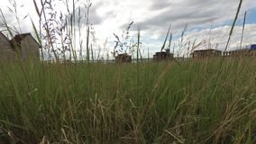 Steppegras die in de wind in daglicht slingeren stock footage