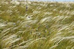 Steppengräser stockbilder