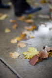 Stepping into puddle. Close up of businessman stepping into puddle on sidewalk littered with leaves Stock Images