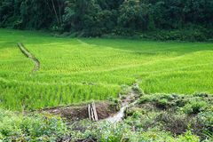 Stepping rice feild in Thailand Stock Photos