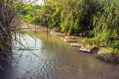 Stepping stones across stream Royalty Free Stock Photo