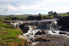 Grimstone & Sortridge Leat, Dartmoor Stock Photo