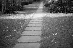 Stepping stones leading the way Royalty Free Stock Photos