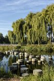 Stepping stones over water leading to willow trees royalty free stock photos