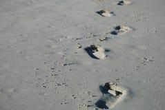 Steps #3. Steps in the sand, Varadero beach, Cuba stock photos