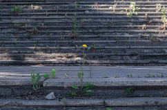 steps Foto de archivo