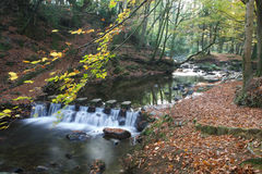 Steps across River Shimna in Tollymore Forest  Stock Photos