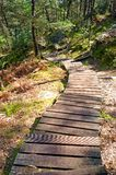 Steps again erosion in fontainebleau forest stock images