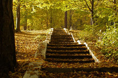 Steps in autumn forest. Covered with autumn leaves concrete steps leading into the forest Royalty Free Stock Photography