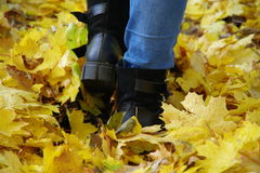 Steps autumn. Royalty Free Stock Photo