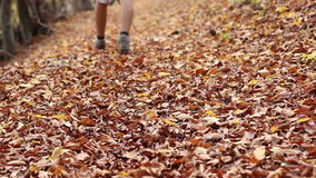 Steps through Autumn Leaves on Trail stock footage