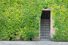 Steps behind iron grill surrounded by green shrubbery. Royalty Free Stock Photo