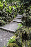 Steps down through Stumpery Stock Images