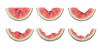 Steps for eating a slice of watermelon. Different stages of a slice of watermelon being eaten isolated on white background royalty free stock photos