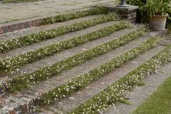 Steps in English country garden Royalty Free Stock Photography