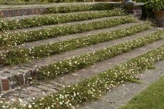 Steps in English country garden stock photo
