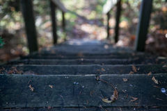 The steps in the fall forest, Canada. The fall forest Royalty Free Stock Images