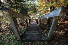 The steps in the fall forest, Canada. The fall forest Stock Image