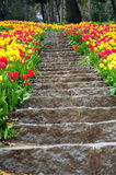 Steps and flowers Royalty Free Stock Image
