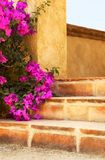Steps With Flowers Stock Photo