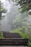 Steps in fog. Surround with green plant, shown as mystery, unknown or morning concept Stock Photography