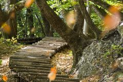 Steps in forest Stock Photos
