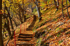 Steps in forest. On autumn royalty free stock photos