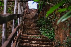 Steps in a forest leading up next to a rock wall stock images