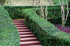 Steps in garden Royalty Free Stock Photos