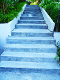 Steps in a garden Royalty Free Stock Photography
