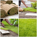 Steps of installing rolls of grass in a garden Royalty Free Stock Image