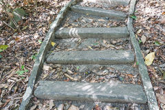 Steps in the jungle. Close up steps in the jungle Royalty Free Stock Photos