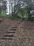 Steps leading out of the woods. Steps covered slightly my mud and royalty free stock image