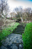 Steps in managed woodland setting Stock Images